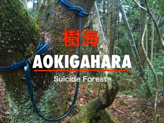 Bosque de Aokigahara 01