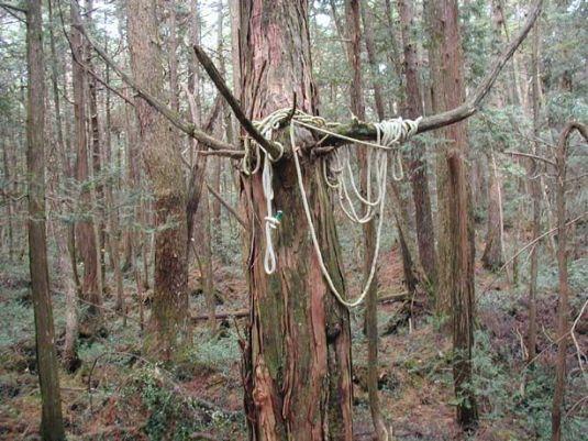 Bosque de Aokigahara 02
